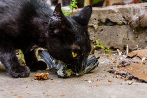 Feral cat with a dead bird