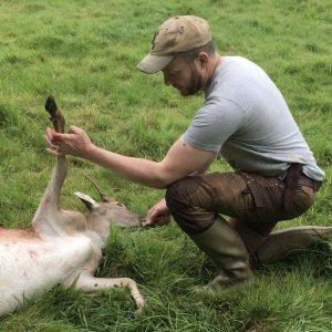 Field dressing a fallow deer