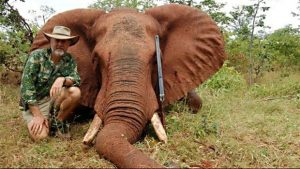 Trophy hunting elephants