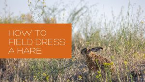 How to field dress a hare